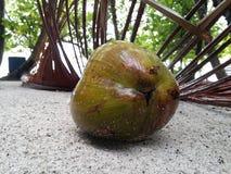 Coconut. On the beach Stock Photos
