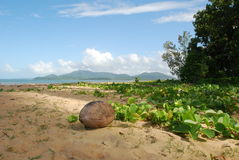 Coconut on the beach Royalty Free Stock Photos