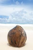 Coconut on beach Stock Photo