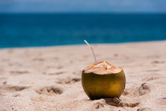 Coconut on the beach. Stock Photos