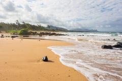 The coconut on the beach, Hawaii. A beach in Kauai with a coconut on the sand Royalty Free Stock Photo