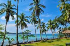 Coconut on the beach at Kood Island. Blue Ocean Clear Water Blue Sky and Coconut Tree Stock Image