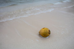 Coconut on Beach Stock Image