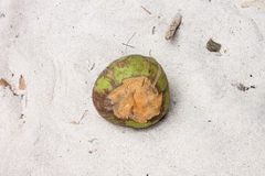 Coconut on a beach Royalty Free Stock Photo