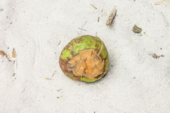 Coconut on a beach Royalty Free Stock Image