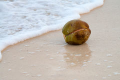 Coconut on the beach Stock Images