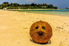Coconut on the beach in Maldives Stock Photography
