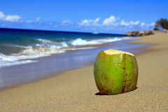 Coconut on beach of ocean Royalty Free Stock Image
