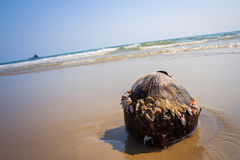 Coconut on the beach Royalty Free Stock Image