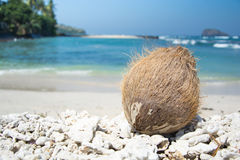 Coconut on a beach. One coconut on a beach Royalty Free Stock Images