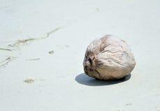Coconut on beach. One coconut on the beach Stock Photography