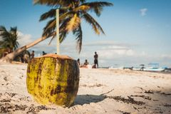 Coconut on the beach at Playa Paraiso, Tulum, Quintana Roo, Mexi. Coconut with two straws and a palm on the beach at Playa Paraiso, Tulum, Quintana Roo, Mexico Royalty Free Stock Image