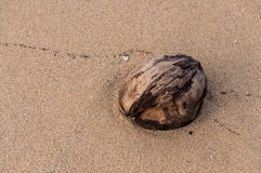 Coconut on the beach. Rayong, Thailand Royalty Free Stock Images