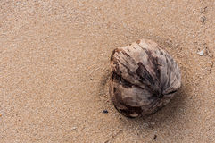 Coconut on the beach. Rayong, Thailand Stock Images