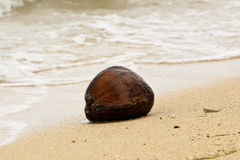 Coconut on Beach Stock Image
