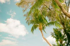 Coconut beach sea sky in the summer of the holiday vintage. Chanthaburi Thailand Royalty Free Stock Photos
