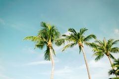 Coconut beach sea sky in the summer of the holiday vintage. Chanthaburi Thailand Royalty Free Stock Image