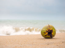 Coconut on the beach in Thailand Royalty Free Stock Photos