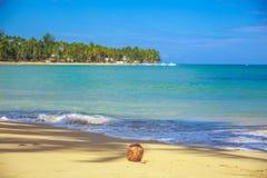 Coconut on the beach Stock Photography