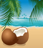 Coconut on the beach under palm tree Royalty Free Stock Photos
