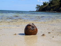 Coconut on a beach Stock Photography