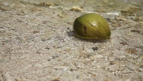 Coconut on the beach in waves stock video footage