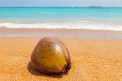 Coconut on beautiful beach. And blue sea Royalty Free Stock Photo