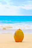 Coconut on a beautiful beach in Cuba Stock Images