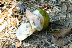 Coconut with big knife Stock Images