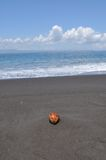 Coconut on black sand Stock Photography