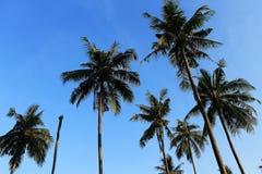 Coconut with blue sky. On the beach Stock Photo