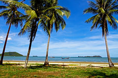 The coconut with blue sky Royalty Free Stock Images