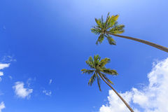 Coconut blue sky and cloudy Stock Images