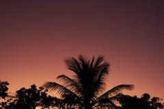 Coconut, Breadfruit And Mango Tree stock photos