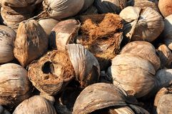 Coconut Brown Husk Hairy Stock Photos