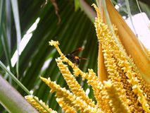 Coconut and bug 1 royalty free stock photo