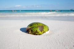 Coconut on Caribbean beach Tulum Mexico Stock Photo