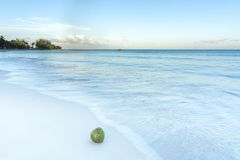 Coconut on clean sandy tropical beach with clear blue water lapp stock photo