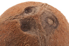Coconut closeup background Royalty Free Stock Images