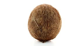 Coconut stock video footage
