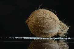 Coconut in a closeup photography. Royalty Free Stock Photo