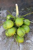 Coconut cluster Stock Photography