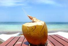 Coconut Cocktail. Image of a coconut ready to drink Stock Images