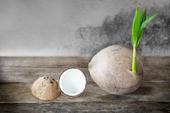 Coconut and coconut grater Royalty Free Stock Images
