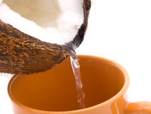 Coconut with coconut milk splash Royalty Free Stock Photography