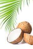 Coconut and coconut oil. Image of Coconut and coconut oil Stock Photo
