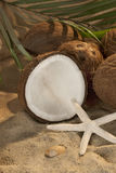 Coconut-1 Royalty Free Stock Images
