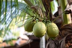 Coconut? Stock Image