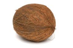 Coconut  (Cocos nucifera) Royalty Free Stock Photo