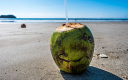 Coconut Costa Rica Beach Vacation Pura Vida Green Pacific Ocean Stock Photos
